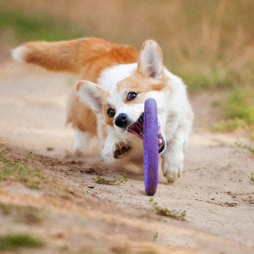 Collar (Коллар) Puller - Тренажер ПУЛЛЕР для собак - Фото 10