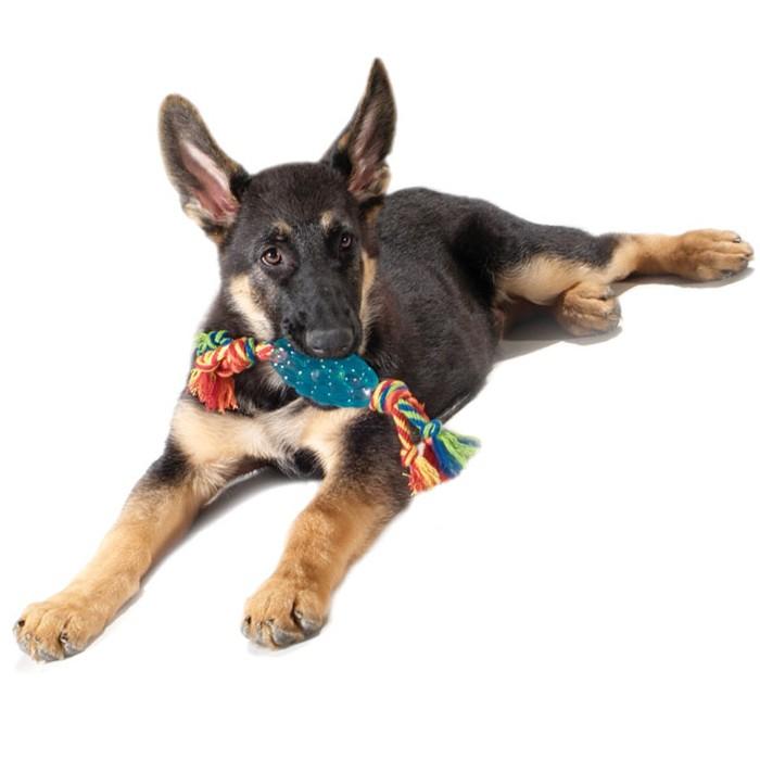 """PETSTAGES Orka Pine Cone Chew Игрушка для собак """"Орка Шишка с канатом"""" - Фото 5"""