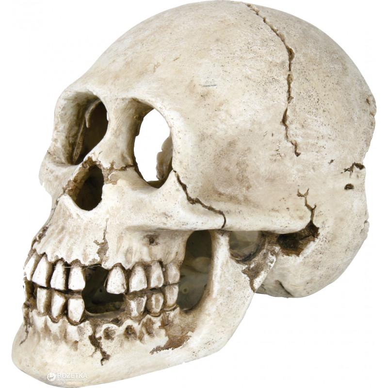 Человеческий череп TRIXIE для декора аквариума